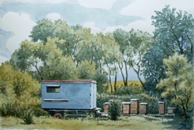 / Úly, akvarel na papíře, 35 x 45 cm, 2017